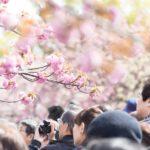 花見を東京でするならどこ!?穴場から夜桜スポットベスト3紹介!