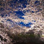 夜桜が綺麗にライトアップ!東京の穴場スポットジャンル別4選!