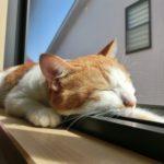蚊取り線香は猫にも影響あるの?科学的根拠に基づいて調べてみた結果