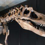 夏休みの自由研究は恐竜で決まり!気になる恐竜のあれこれを特集!
