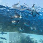 水族館はどちらがおすすめ?品川と池袋を徹底的に比較してみた結果