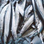 秋刀魚の旬の時期はいつ?2018年の値段は高い?豊漁?漁獲量は?